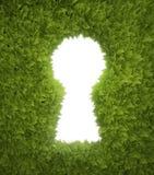 Garden keyhole. Green hedge opening shaped like a keyhole Stock Image