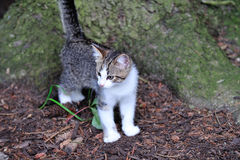 Garden Kitten Royalty Free Stock Images