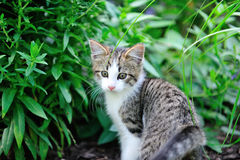 Garden Kitten Stock Photography