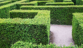 Garden labyrinth maze of hedges Royalty Free Stock Photography