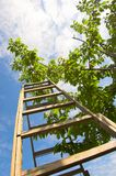 Garden ladder. And tree stock photography