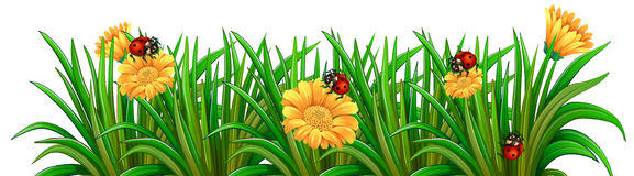 A garden with ladybugs Stock Photo