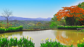 Garden and lagoon. Ralaxy, nature, garden, grass beautiful nature,green grass,lagoon,pool Royalty Free Stock Images