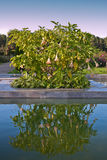 Garden with laguna Royalty Free Stock Image