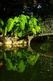 Garden lake bridge. Arum's leafs in a italian garden with lake and bridge, Como, Italy Stock Photography