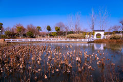 Garden,lake and loutus Stock Image