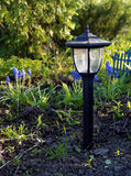 Garden Lamp. With blue flowers Stock Images
