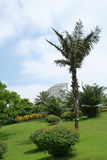 Garden landscape 2. A garden landscape with palms,flowers and lawn Stock Photography