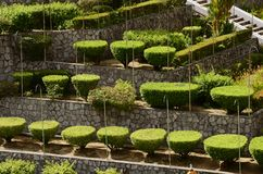 Garden landscape Royalty Free Stock Photo
