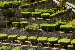 Garden landscape. Landscape of Nong Nooch Garden in Pattaya, Thailand Royalty Free Stock Photo