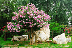 Garden landscape. A part of garden landscape in park Royalty Free Stock Photography