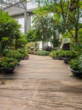 Garden landscape in green house Royalty Free Stock Photography