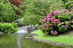 Japanese garden landscape royalty free stock photos