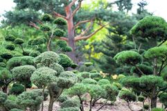 Garden Landscape. Topiary Royalty Free Stock Images