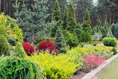 Garden landscape. With variety of plants and trees Stock Image
