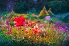 Garden Landscaping Design. Flower Bed, Green Trees Stock Photos