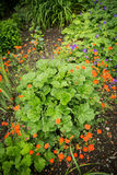 Garden landscaping in the summer royalty free stock photo