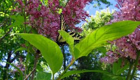 Garden lane among oases of floral magical butterfly Stock Photos