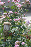 Garden lantern in front of pale pink roses. Garden lantern in front of a pale pink rose bush in a beautiful cottage garden Stock Photo