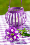 Garden lantern with verbena Stock Images