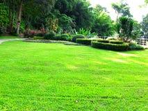 A garden Royalty Free Stock Image