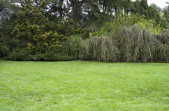 Garden lawn Royalty Free Stock Photography