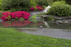 Garden lawn pond. Garden with nice lawn, pond and beautiful flowers Stock Photo