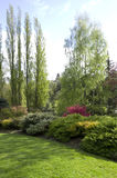 Garden lawn after spring rain. A backyard garden with healthy lawn and plants in spring time stock photography