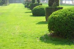 Garden Lawn Royalty Free Stock Photos