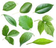 Garden leaves Royalty Free Stock Photos