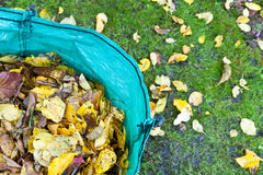 Garden Leaves in a Recycling Sack Stock Photos