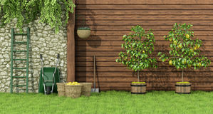 Garden with lemon tree. Sunny garden with two lemon trees and wicker baskets - 3D Rendering Stock Image