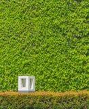Garden light in the home garden. Stock Photography