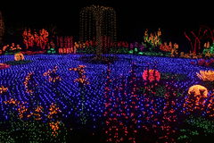 Garden of Lights. Light display at Bellevue Botanical Gardens in Bellevue, Washington, USA, of a pond with fountain surrounded by flowers royalty free stock image