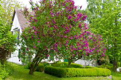 Garden with lilac in spring. Romantic green garden with lilac in pring Royalty Free Stock Photography