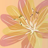 Garden lily. Abstract vector background with a gentle lily Royalty Free Stock Image