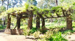 Garden Limestone Arbor with Hanging Wisteria. Perspective view of a limestone arbor with hanging purple wisteria in a treed nature setting at Araluen Botanic Stock Images
