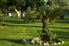 Garden with little palm tree and sod Stock Images