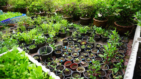 Garden with a lot of tree pots which have sprouts planted in. Royalty Free Stock Photos