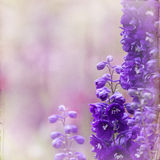 Garden lupin background Royalty Free Stock Photos