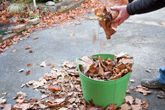 Garden maintenance collecting autumn leaves Royalty Free Stock Photography