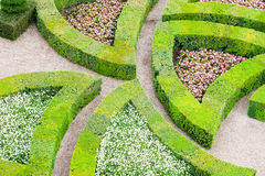 Garden with many different kinds of boxwood. Royalty Free Stock Photography