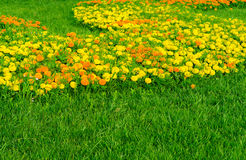 Garden Of Marigold Calendula Stock Images