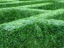 Garden maze Royalty Free Stock Photos