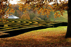 Garden maze in autumn. Looking over the corner of a garden maze in autumn Royalty Free Stock Photography