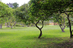 Garden and meadow of grandee. Grandee ( shilin official residence ) was once chiang kai-shek and song meiling couple residence in taiwan, it is also the first stock photography