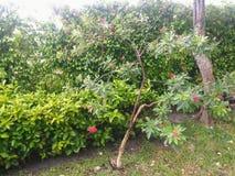 A garden in Miami, Florida United States. A garden in Miami, Florida, United States on July 30, 2018 stock photo