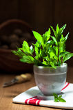 Garden Mint Stock Photo