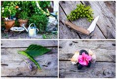 The garden Stock Photo