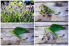 The garden Stock Photography